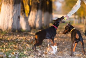 dangerous-dog-proof-of-liability-attorney-charlotte-nc